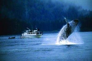 Alaska - Whale2
